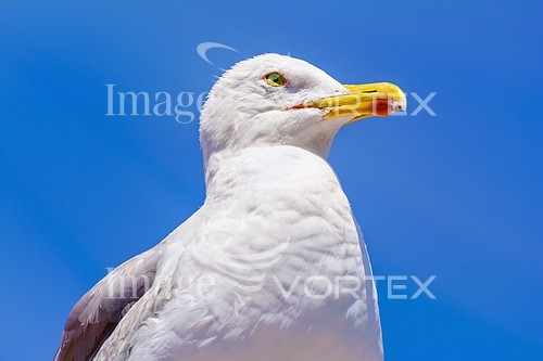 Bird royalty free stock image #760298953