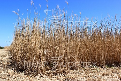 Industry / agriculture royalty free stock image #761621529