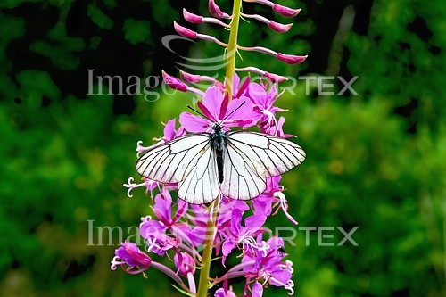 Insect / spider royalty free stock image #763580848