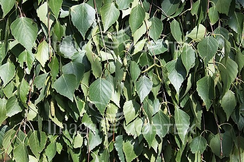 Background / texture royalty free stock image #766685913