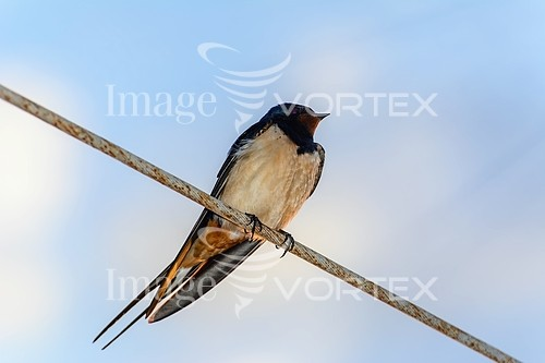 Bird royalty free stock image #767366054