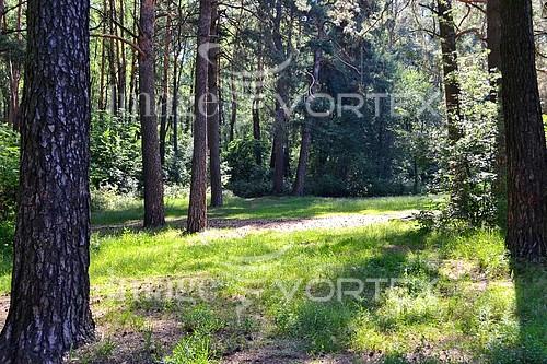 Nature / landscape royalty free stock image #771454264
