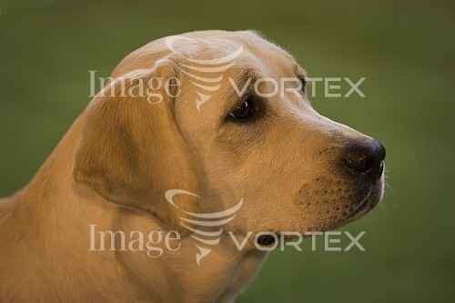 Pet / cat / dog royalty free stock image #772230700