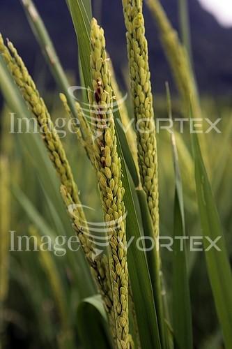 Nature / landscape royalty free stock image #778841129