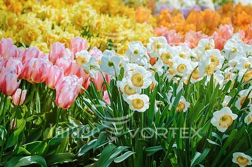 Flower royalty free stock image #785088005