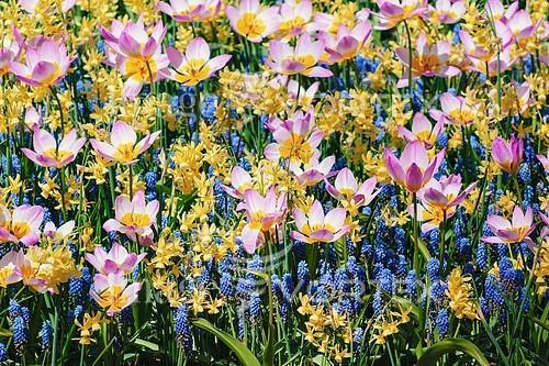 Flower royalty free stock image #785181099