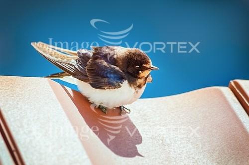 Bird royalty free stock image #786019162