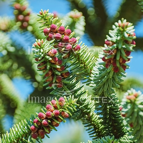 Nature / landscape royalty free stock image #786130033