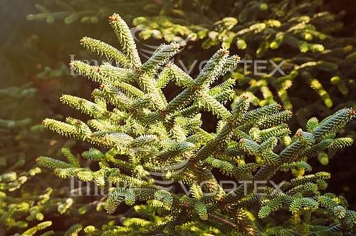 Nature / landscape royalty free stock image #786651259