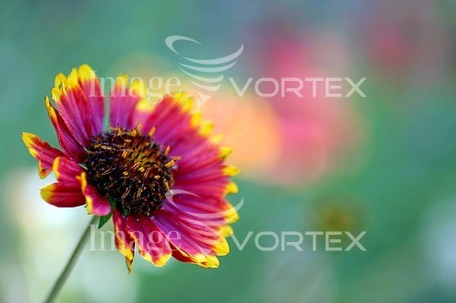 Flower royalty free stock image #792459705