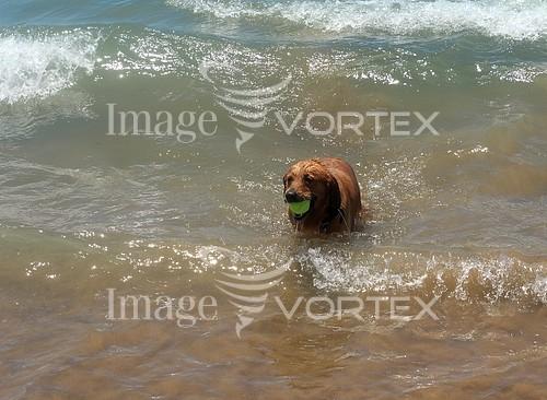 Pet / cat / dog royalty free stock image #808448257