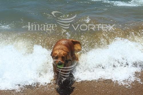 Pet / cat / dog royalty free stock image #808453156