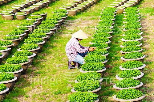 Industry / agriculture royalty free stock image #809347374