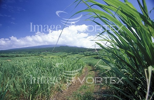 Industry / agriculture royalty free stock image #817886824