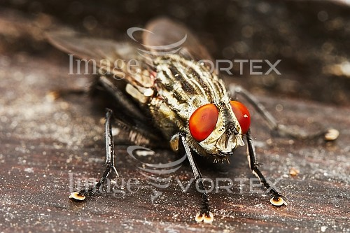 Insect / spider royalty free stock image #818061042