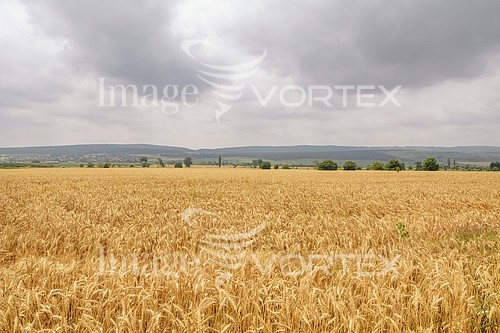 Industry / agriculture royalty free stock image #821846764