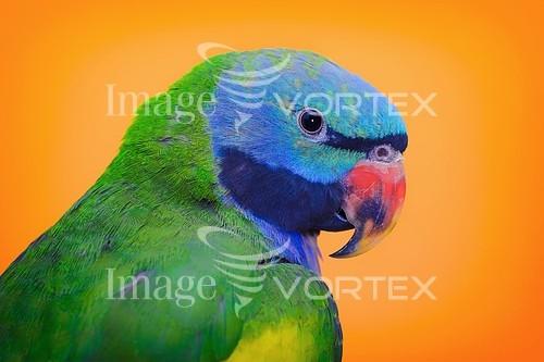 Bird royalty free stock image #821701068