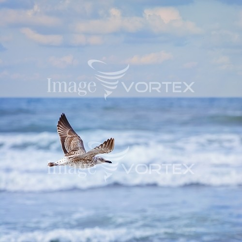 Bird royalty free stock image #822116127