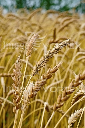 Industry / agriculture royalty free stock image #835972796