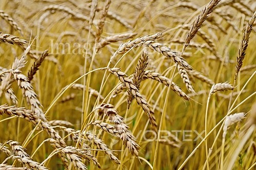 Industry / agriculture royalty free stock image #835988667