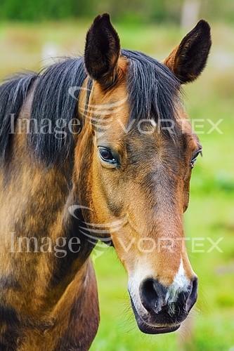 Animal / wildlife royalty free stock image #836329482