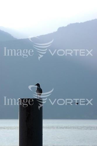 Bird royalty free stock image #836103111