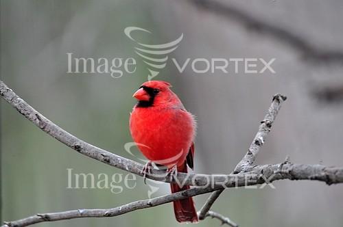 Bird royalty free stock image #840996095