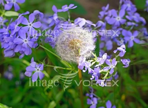 Nature / landscape royalty free stock image #843706106