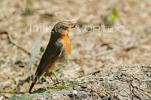 Bird royalty free stock image #857297774