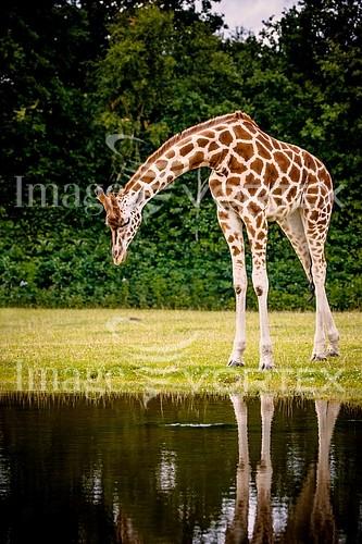 Animal / wildlife royalty free stock image #858533253