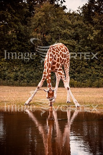 Animal / wildlife royalty free stock image #858541748