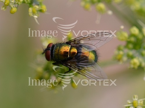 Insect / spider royalty free stock image #860992896