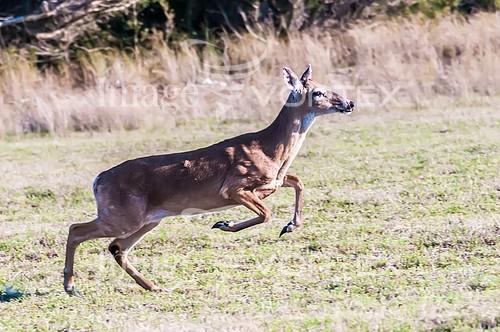 Animal / wildlife royalty free stock image #864723076
