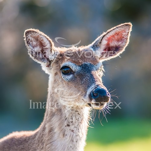 Animal / wildlife royalty free stock image #864823025