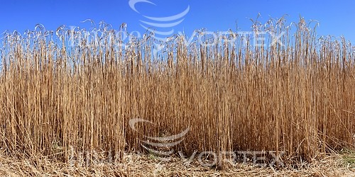 Industry / agriculture royalty free stock image #871067064