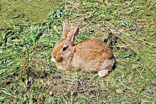 Animal / wildlife royalty free stock image #879808803