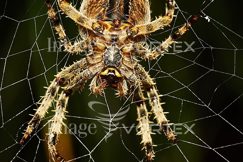 Insect / spider royalty free stock image #882801096