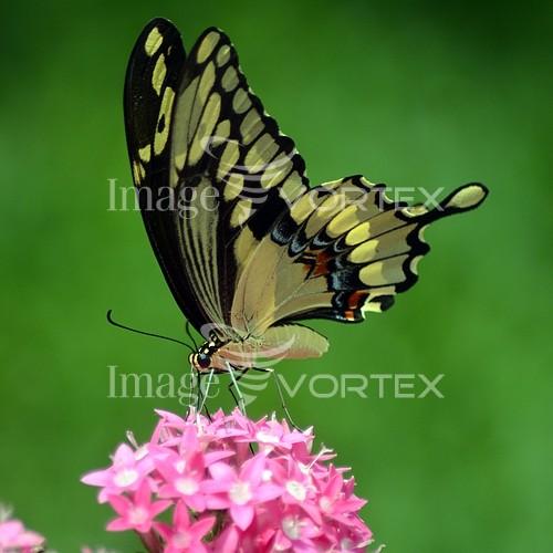 Animal / wildlife royalty free stock image #882400766