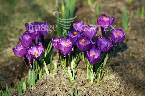 Flower royalty free stock image #883796514