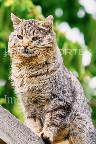 Pet / cat / dog royalty free stock image #886992468