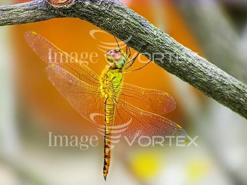 Animal / wildlife royalty free stock image #886445817