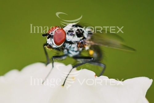 Insect / spider royalty free stock image #886891994