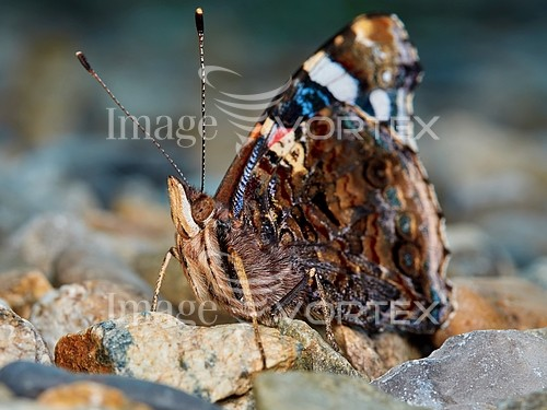 Insect / spider royalty free stock image #887145319