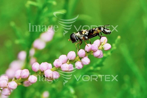 Insect / spider royalty free stock image #887070189