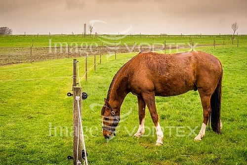 Animal / wildlife royalty free stock image #888226686