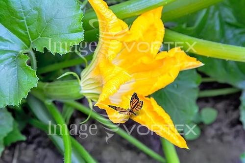 Nature / landscape royalty free stock image #889353347