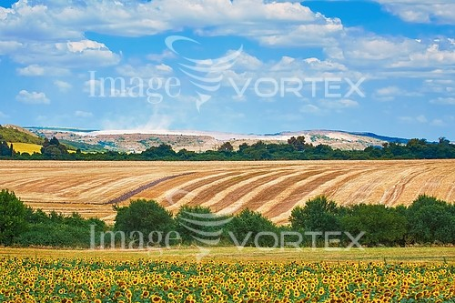 Industry / agriculture royalty free stock image #890405674