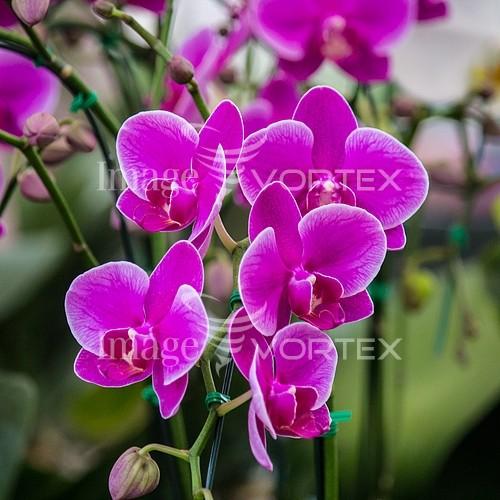 Flower royalty free stock image #893232404