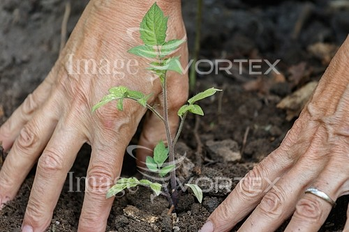 Industry / agriculture royalty free stock image #895381385