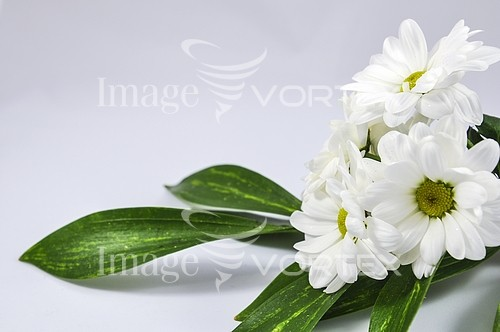 Background / texture royalty free stock image #895141696
